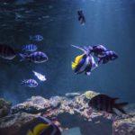 animations aquarium de vendee - atelier nourissage - aquarium vendee