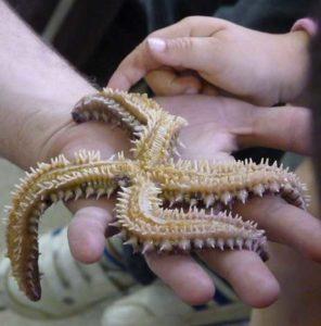 """Atelier tactile """"Découverte des animaux marins"""""""