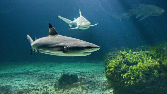 animations aquarium de vendee - les requins