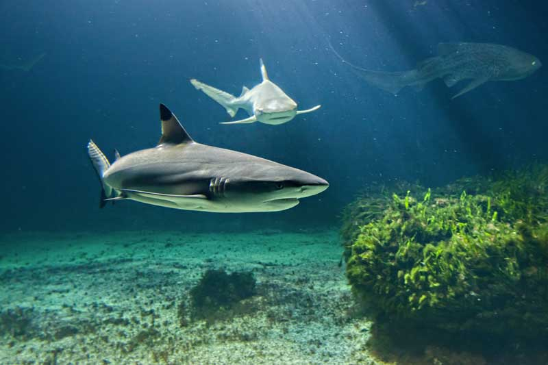 animations aquarium de vendee - les requins