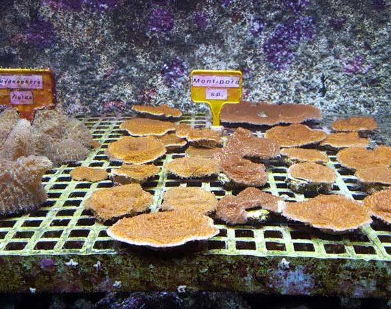L'Aquarium le 7ème continent favorise la reproduction des poissons et coraux