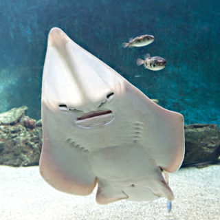 aquarium-le-7eme-continent-(74)