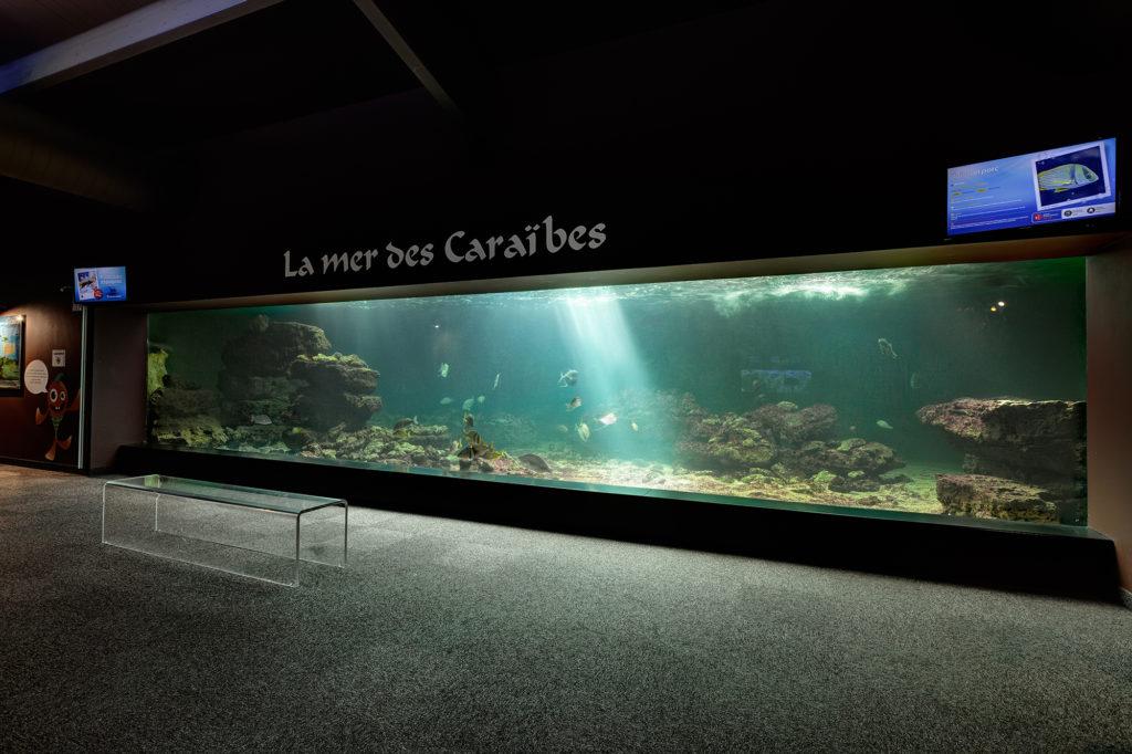 aquarium-talmont-saint-hilaire-vue-bassin-mer-des-caraibes-vivre-l-experience-aquarium-de-vendee