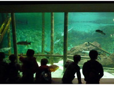 Tarifs Aquarium Vendée - découvrir les offres spéciales groupes