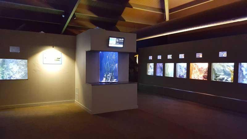 nouvel aquarium au sein de l univers atlantique et m 233 diterran 233 en aquarium de vend 233 e