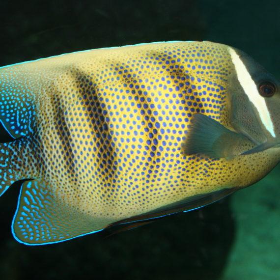 groupes scolaires et parascolaires aquarium de vend 233 e