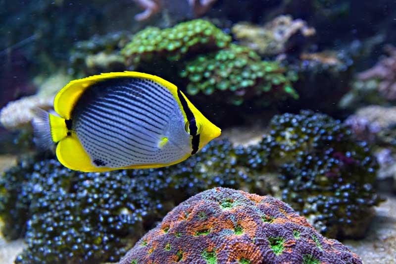 Atelier c 39 est quoi un poisson aquarium de vend e for Poisson et aquarium