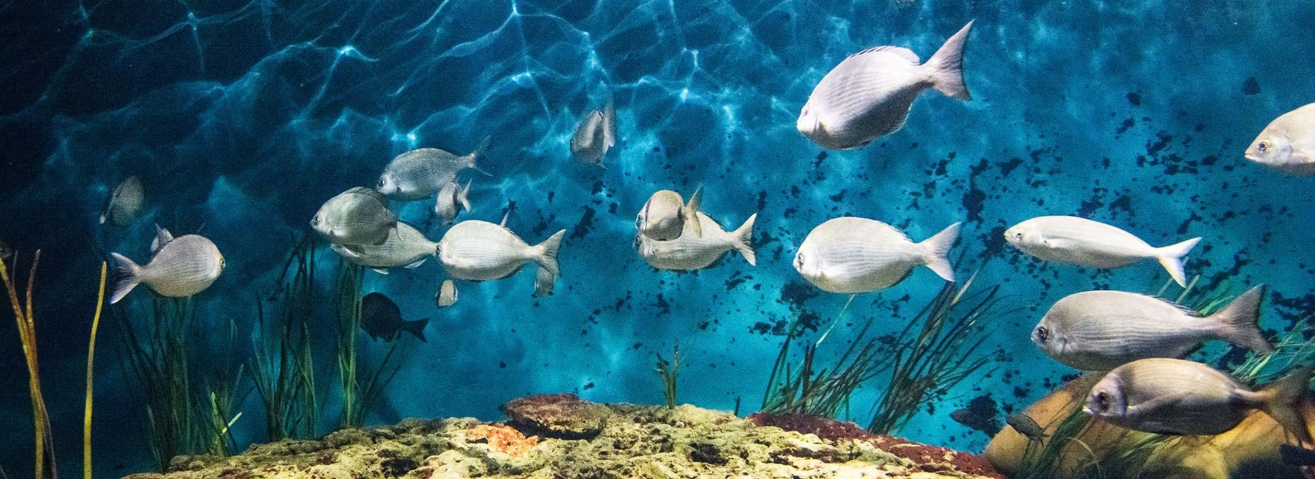 Protégeons ensemble nos océans