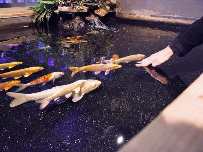 Tarifs aquarium vendée - programme complet d'animations toute l'année