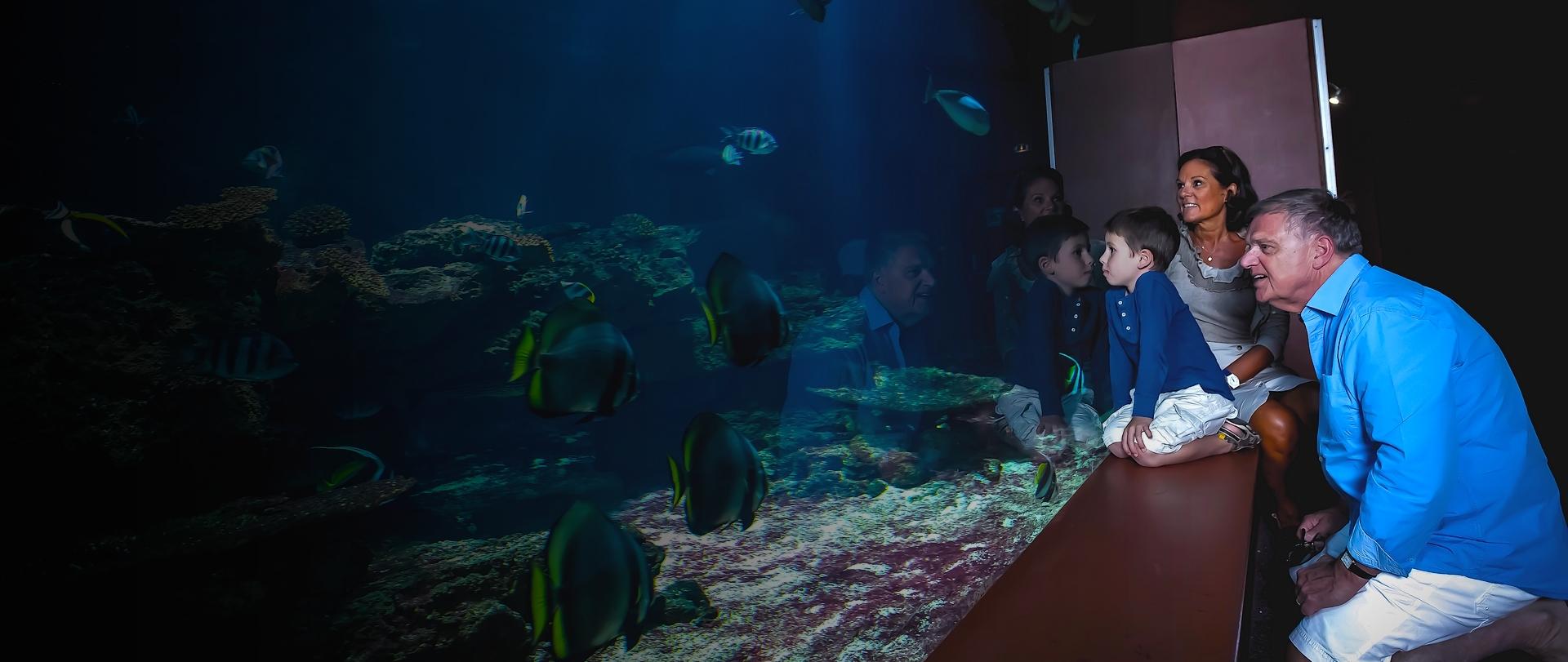cité aquarium deau de mer