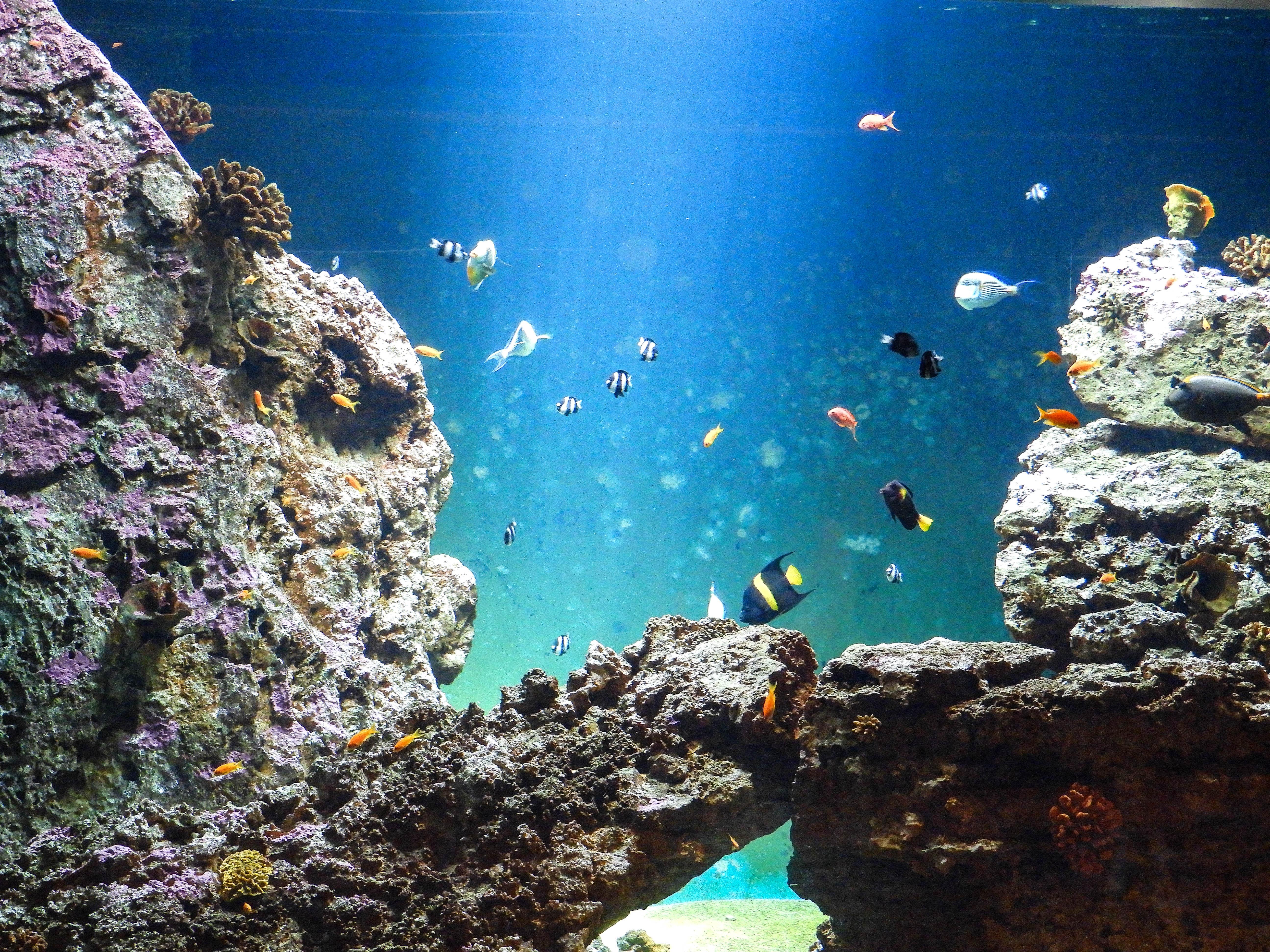 aquarium-talmont-saint-hilaire-animations-aquarium-de-vendee