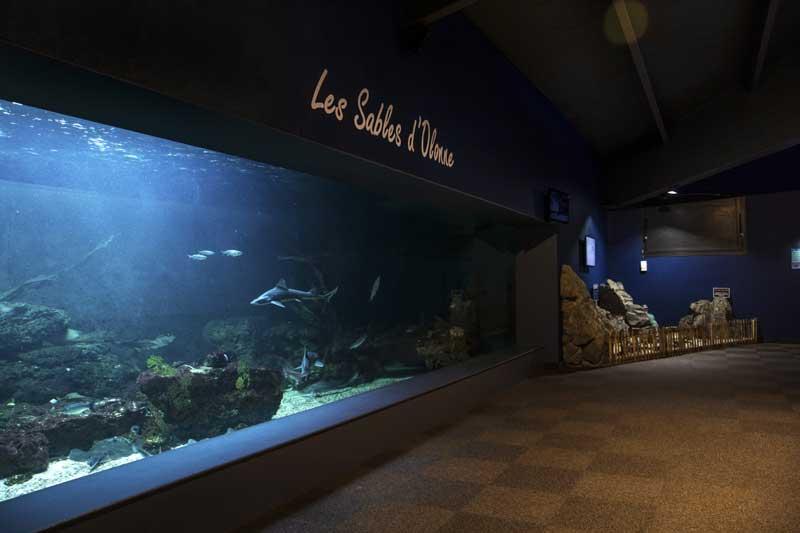 Groupes et CE : tous les tarifs préférentiels - Aquarium des sables d'olonne