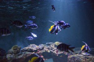 Nourrissage des poissons @ Aquarium de Vendée