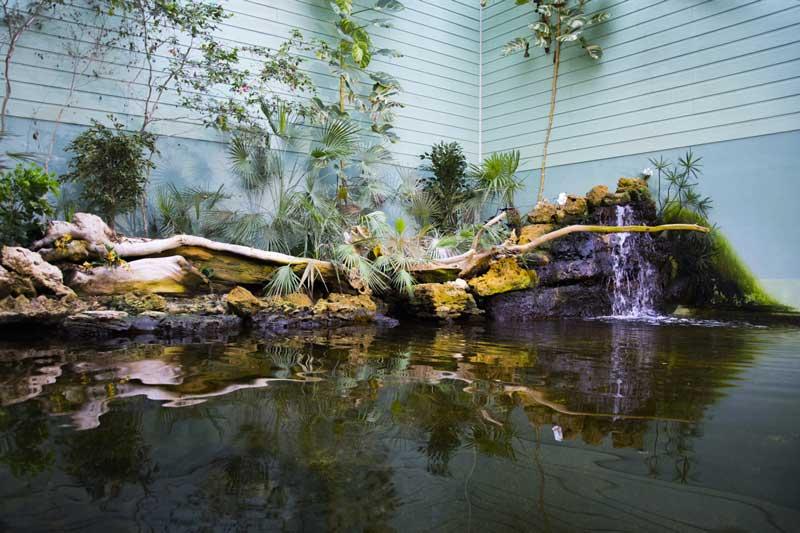 L'aquarium Talmont saint-hilaire et son univers tropical pour vivre une expérience haute en couleurs
