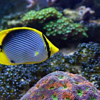aquarium-sables-dolonne-groupes-scolaires-cest-quoi-un-poisson-aquarium-vendee