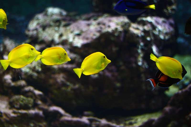 aquarium-talmont-saint-hilaire-quelques-astuces-pour-profiter-de-la-visite-aquarium-de-vendee