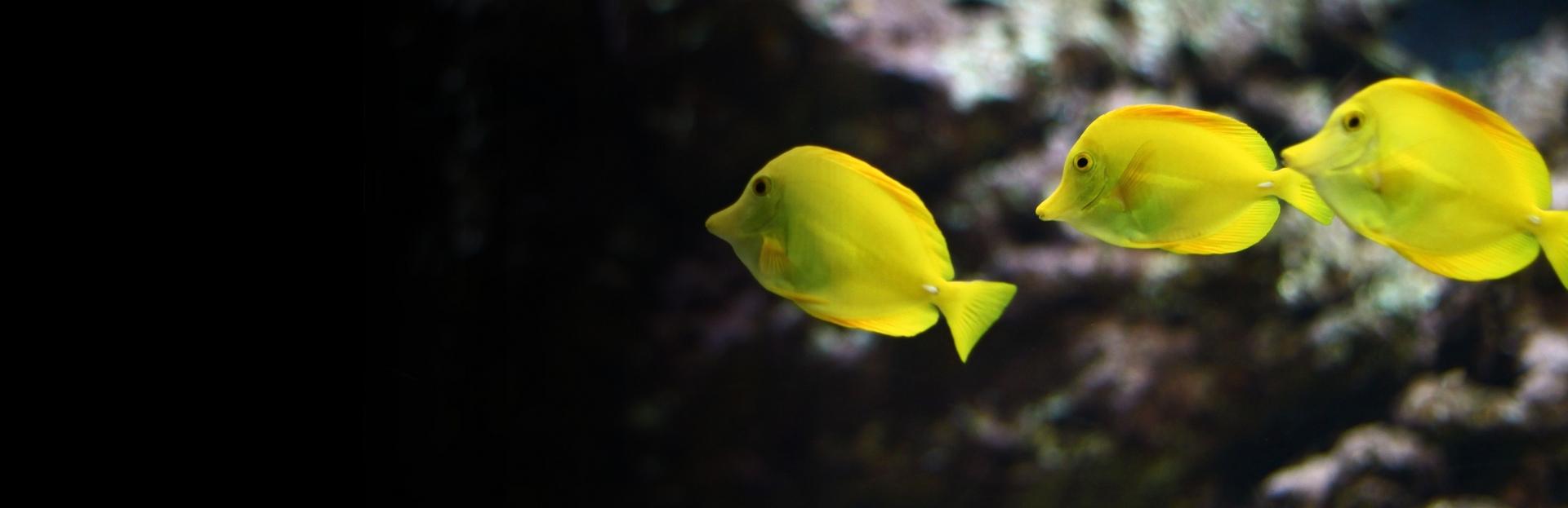 Découvrez les trésors de l'Aquarium de Vendée