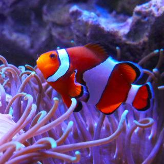 Aquarium_de_Vendée_25